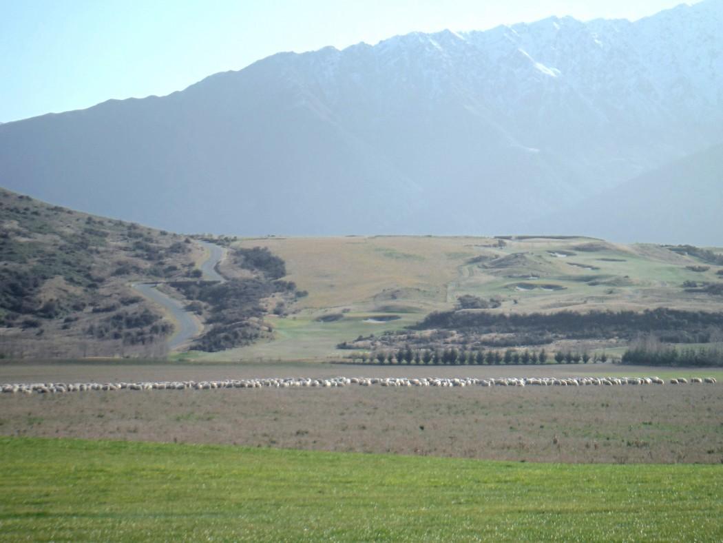 Plaines Nouvelle Zélande
