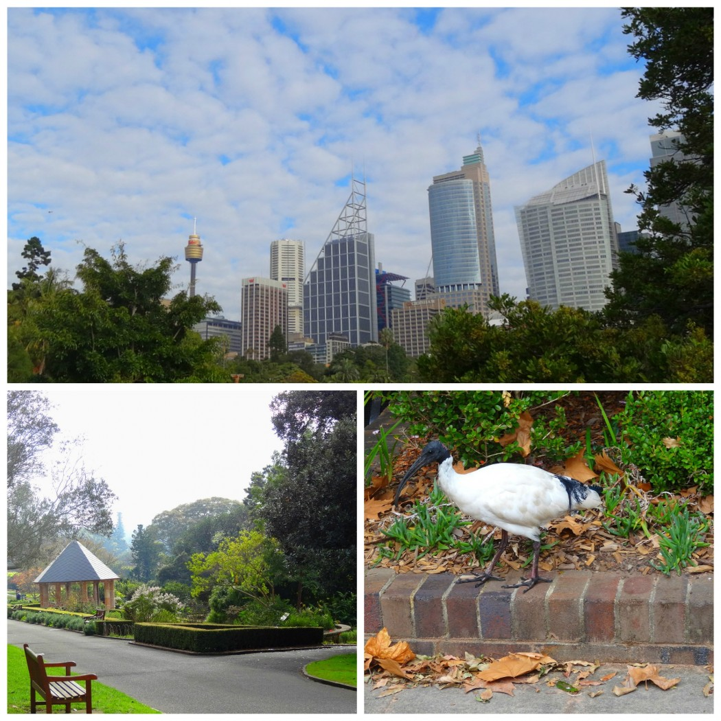 Collage Royal Botanic Gardens Sydney
