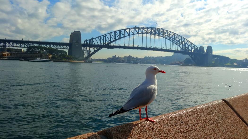 Harbour bridge et mouettes Sydney