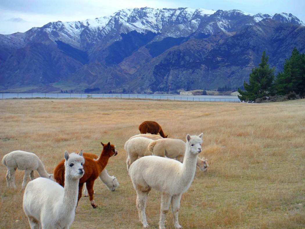Nouvelle-Zélande © Vie d'Expat 3